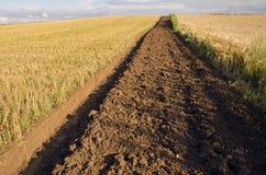 Erster Ackerbaugraben auf dem Getreidegebiet Stockfotos