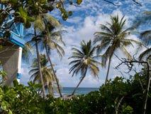 Erster Blick auf Palmen-Paradies Stockfoto