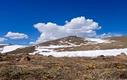 Erster Frühlings-gelbe Blumen in den Alpenwiesen, im Schnee und in den Wolken Lizenzfreie Stockbilder