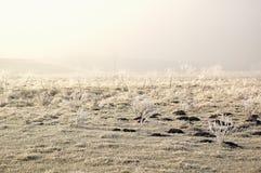 Erster Frost - weiße Leuchte Stockfotos