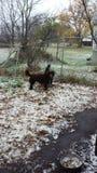 Erster Michigan-Schnee Lizenzfreies Stockfoto