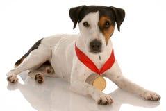 Erster Platzhund Stockfoto