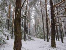 Erster Schnee Lizenzfreies Stockfoto