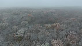 Erster Schnee stock video footage