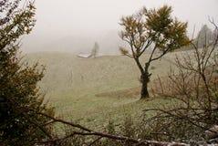 Erster Schnee Stockfoto