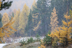 Erster Schnee auf dem Baikalsee Lizenzfreie Stockbilder