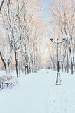 Erster Schnee auf dem Boulevard am Wintermorgen Lizenzfreie Stockbilder