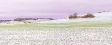 Erster Schnee auf Erntefeldern im Tageslicht Lizenzfreies Stockfoto