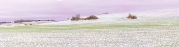 Erster Schnee auf Erntefeldern im Tageslicht stockfoto