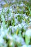 Erster Schnee auf Rasen Stockfotos