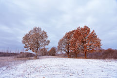 Erster Schnee in den Herbstwaldfallfarben auf den Bäumen autum Lizenzfreies Stockfoto
