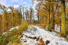 Erster Schnee in der Eichenwaldung im Park Lizenzfreie Stockfotografie