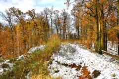 Erster Schnee in der Eichenwaldung im Park Lizenzfreie Stockfotos