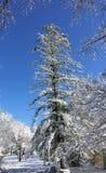 Erster Schnee der Jahreszeit Stockfotos
