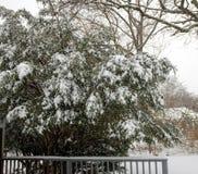 Erster Schnee der Jahreszeit lizenzfreies stockbild
