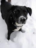 Erster Schnee des Welpen Stockbild