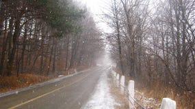 Erster Schnee im Herbst auf der Straße im Wald lizenzfreies stockfoto