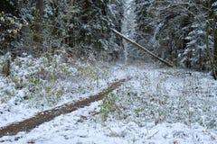 Erster Schnee im Herbstwald Stockfotografie