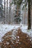 Erster Schnee im Herbstwald Stockbild