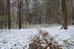 Erster Schnee im Herbstwald Lizenzfreie Stockfotografie