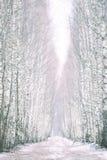 Erster Schnee im Holz am Tageslicht mit grünen Kiefern, Lizenzfreie Stockfotos
