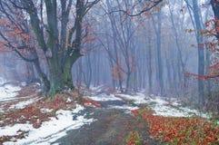 Erster Schnee im nebelhaften Herbstwald lizenzfreie stockfotografie