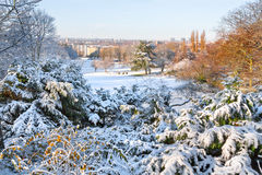 Erster Schnee im Park. Lizenzfreie Stockbilder