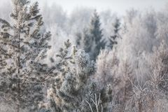 Erster Schnee im Park Russland, UralJanuary, Temperatur -33C stockbild