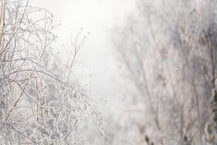 Erster Schnee im Park Russland, UralJanuary, Temperatur -33C stockfotografie