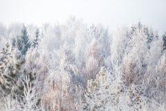 Erster Schnee im Park Russland, UralJanuary, Temperatur -33C lizenzfreies stockfoto