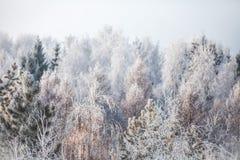 Erster Schnee im Park Russland, UralJanuary, Temperatur -33C lizenzfreie stockfotografie
