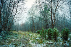Erster Schnee im Wald Stockfotos