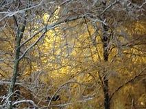 Erster Schnee, schöne Aussicht auf der schmalen gehenden Weise im Herbst Stockbild