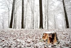 Erster Schneetag Lizenzfreie Stockbilder