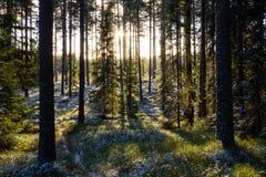 Erster Winterfrost im grünen Wald Lizenzfreie Stockfotos