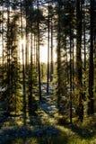 Erster Winterfrost im grünen Wald (vertikal) Lizenzfreies Stockbild