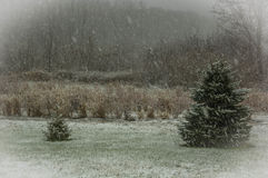Erster Winterschnee Stockbilder