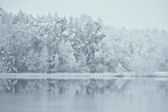 Erster Wintertag 2017-12 -01 Snowy-Reflexionen Stockbilder