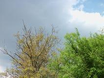 Erstes Gewitter der Jahreszeit nähert sich stockfotos