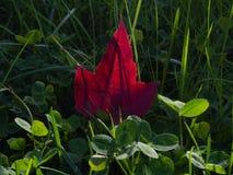 Erstes Herbstblatt stockbild