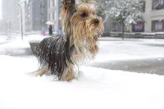Erstes Mal im Schnee Stockfotografie