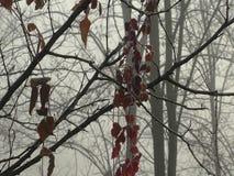 Erstes Stockwerk mit Rot verlässt in einer Waldvegetation im Nebel stock footage