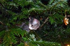 Erstes Weihnachten für ein Kätzchen lizenzfreie stockfotografie