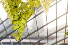 Ersthaar auf Architektur-Fassaden-Hintergrund mit Sun-Licht Stockfoto