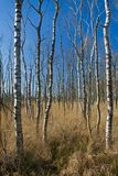 Ertrinken des Waldes lizenzfreie stockbilder