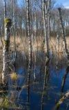 Ertrinken des Waldes lizenzfreies stockfoto