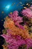 Ertsader en gekleurde school van vissen, Rode Overzees, Egypte Royalty-vrije Stock Foto