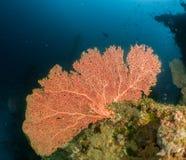 Ertsader en koraal de Maldiven Stock Foto's