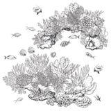 Ertsaderkoralen en Vissen Stock Foto