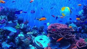 Ertsadervissen en koraal stock video